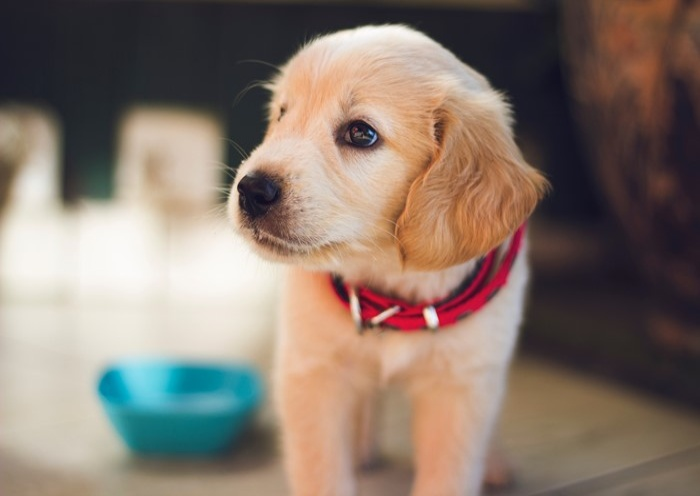 犬心絲蟲預防藥該怎麼吃?